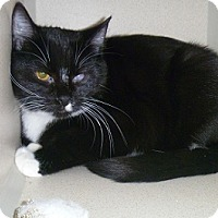 Adopt A Pet :: George - Hamburg, NY