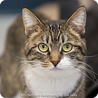 Adopt A Pet :: Cupid - Fountain Hills, AZ