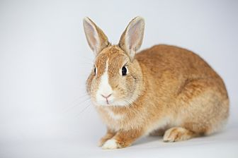 Other/Unknown Mix for adoption in Los Angeles, California - Firecracker