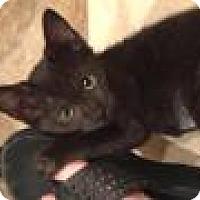Adopt A Pet :: Marla - East Hanover, NJ
