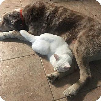 Domestic Shorthair Cat for adoption in Dawson, Georgia - Cassie