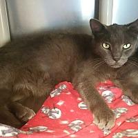 Adopt A Pet :: Dominick - Chippewa Falls, WI