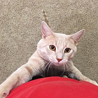 Adopt A Pet :: Romeo - Jerseyville, IL