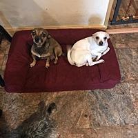 Adopt A Pet :: Powder - Stroudsburg, PA