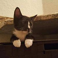 Adopt A Pet :: Joey - Land O Lakes, FL