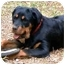 Photo 1 - Rottweiler Dog for adoption in Cedar Creek, Texas - Opal