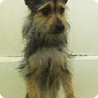 Adopt A Pet :: Mickey - URGENT FOSTER NEEDED - Seattle, WA