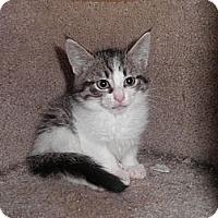 Adopt A Pet :: Tango - Warren, MI