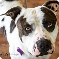 Adopt A Pet :: KEELO - Phoenix, AZ