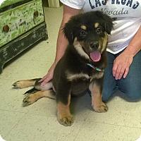 Adopt A Pet :: Barney - Westtown, PA