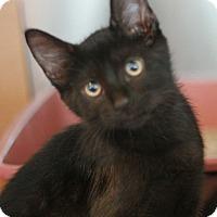 Adopt A Pet :: Lex - Canoga Park, CA