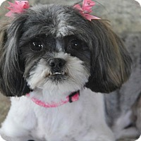 Adopt A Pet :: Lexi - Yuba City, CA