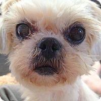 Adopt A Pet :: Lincroft NJ - Lily - New Jersey, NJ