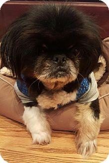 Pekingese Mix Dog for adoption in Alpharetta, Georgia - BaoLi