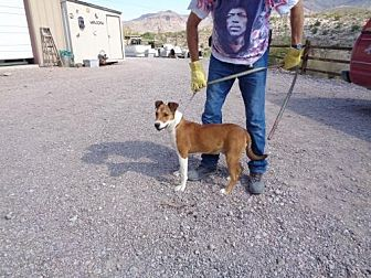 Shepherd (Unknown Type) Mix Dog for adoption in Golden Valley, Arizona - Chaps
