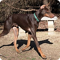 Adopt A Pet :: HOUSTON - Greensboro, NC