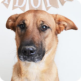 Mixed Breed (Large)/Shepherd (Unknown Type) Mix Dog for adoption in Wilmington, Delaware - Mika