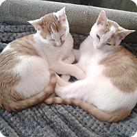 Adopt A Pet :: Juniper&Jiminy-Adopt. Pendingn - Arlington, VA