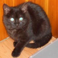 Adopt A Pet :: Geordi - Saskatoon, SK