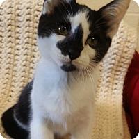 Adopt A Pet :: Ayra - Berlin, CT