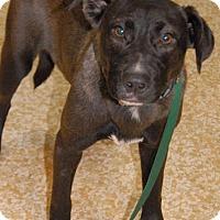 Adopt A Pet :: Sable - Shelbyville, TN