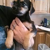 Adopt A Pet :: Rhianna - Fort Scott, KS