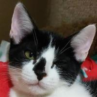 Adopt A Pet :: Sylvanas - Pleasanton, CA