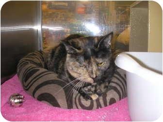 Domestic Shorthair Cat for adoption in Woodstock, Georgia - Marlene