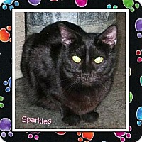 Adopt A Pet :: Sparkles - Akron, OH