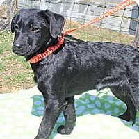 Adopt A Pet :: Mulan - Wytheville, VA