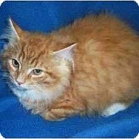 Adopt A Pet :: Bubby - Spencer, NY