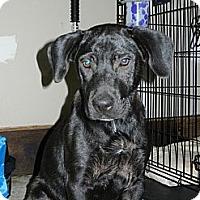Adopt A Pet :: Jenny - South Jersey, NJ