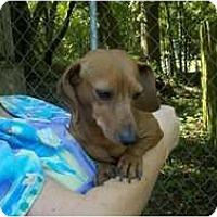 Adopt A Pet :: Rootie - Niceville, FL