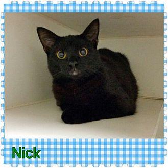 Domestic Shorthair Cat for adoption in Louisburg, North Carolina - Nick