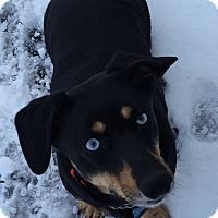 Adopt A Pet :: Mori - Raritan, NJ