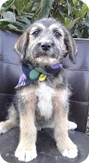 Terrier (Unknown Type, Small) Mix Puppy for adoption in Corona, California - LUCAS