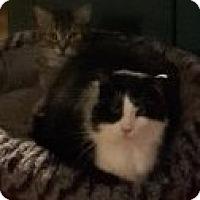 Adopt A Pet :: Picasso - Toronto, ON