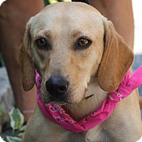 Adopt A Pet :: Wilma - West Grove, PA