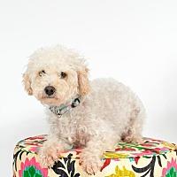 Adopt A Pet :: Arthur - St. Louis Park, MN