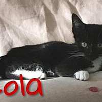 Adopt A Pet :: Lola - Island Heights, NJ