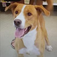 Adopt A Pet :: Mickey - Selbyville, DE
