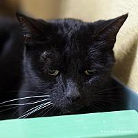 Adopt A Pet :: Sachiko - Tucson, AZ