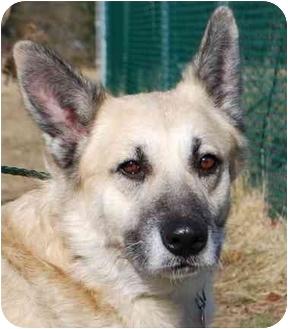 German Shepherd Dog Mix Dog for adoption in Vineland, New Jersey - Slim Shady