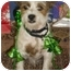 Photo 2 - Terrier (Unknown Type, Small)/Lhasa Apso Mix Dog for adoption in Lockhart, Texas - Wrangler