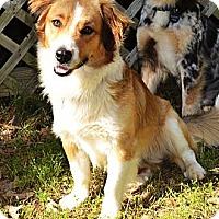 Adopt A Pet :: *Oakley & Meadow- PENDING - Westport, CT