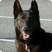 Adopt A Pet :: Noble gentle Lancelot - Baltimore, MD