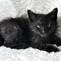 Adopt A Pet :: Duncan - Shreveport, LA