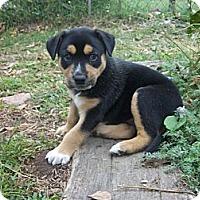 Adopt A Pet :: Katy - Blanchard, OK