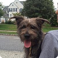 Adopt A Pet :: Rhett Butler - Marlton, NJ
