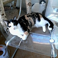 Adopt A Pet :: Bridget - Scottsdale, AZ
